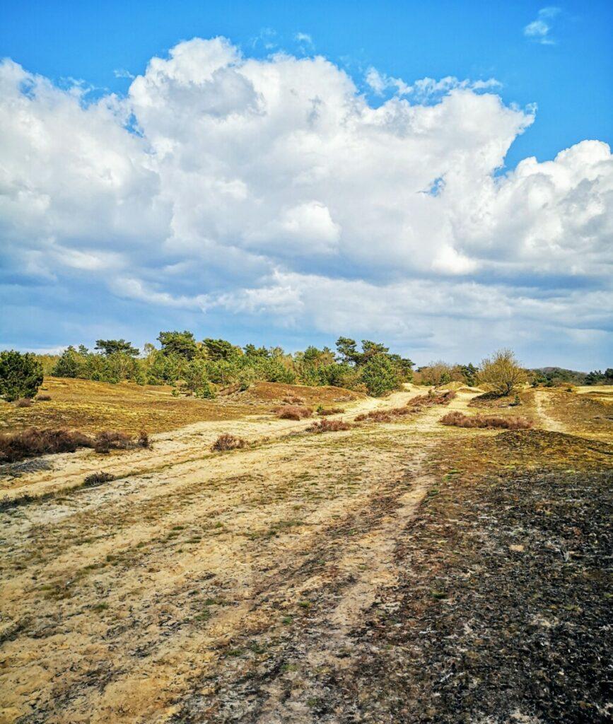 Zandverstuivingen Kootwijkerzand - Veluwe