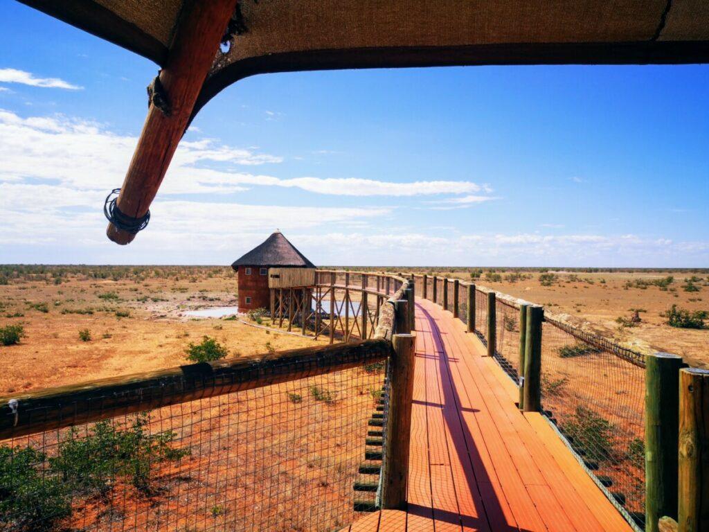 Olifantsrus in Etosha NP - Namibië