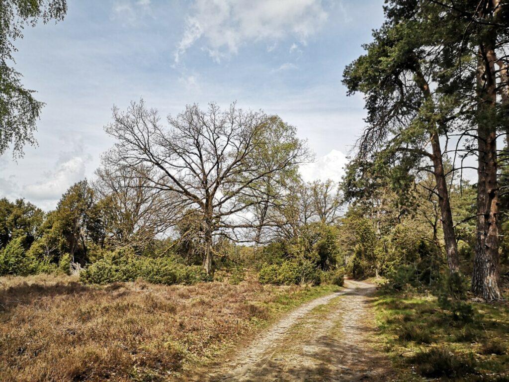 10 km De Lutte Florilympha