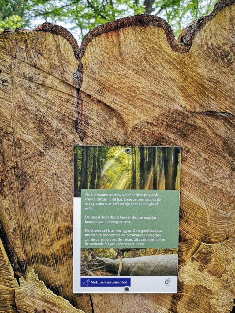 Door droogte van een paar jaar achtereen zijn er veel bomen gekapt uit voorzorg