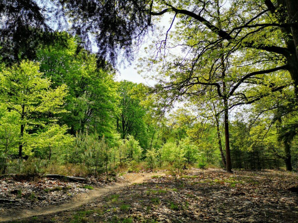 Mooie paden en lanen op de Sallandse Heuvelrug - Sprengenberg