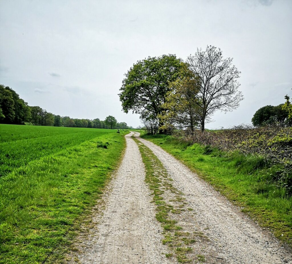Landgoedwandeling In Salland - Rondwandeling De Sprengenberg - 11 km
