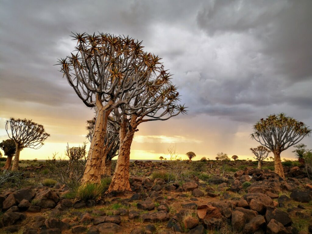 Visit the Unique Quivertree Forest and Giant's Playground - Keetmanshoop, Namibia