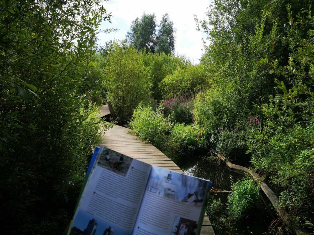 Het oeverbos in Amsterdam