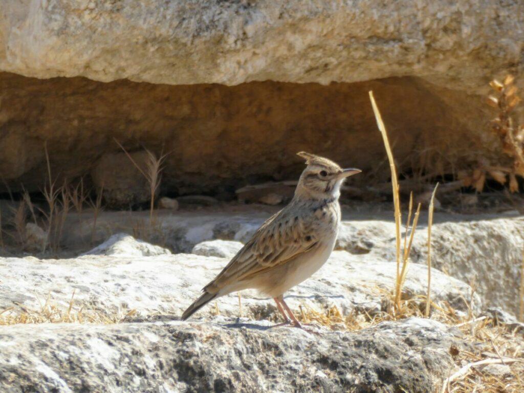 Leven in de dorre wereld van de ruïnes van Jerash